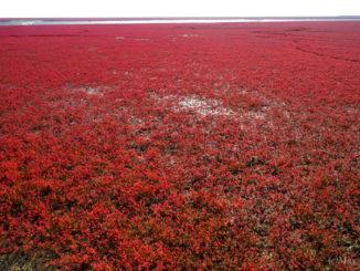 中国 紅海灘風景区 China Honghai