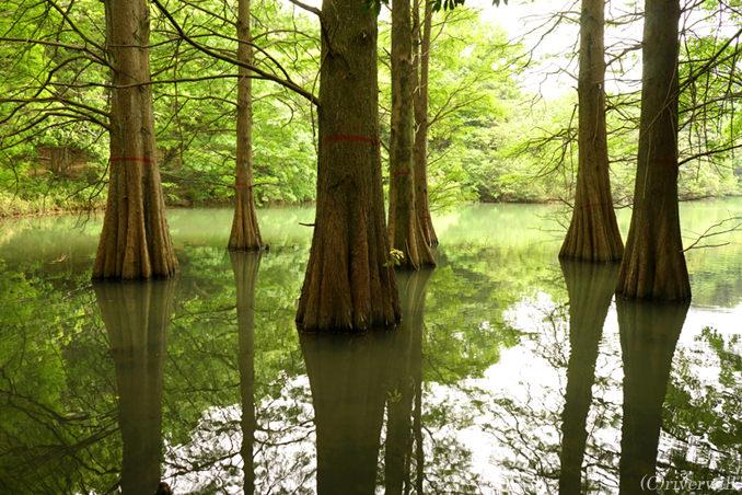 ここはどこ?異世界感漂うふしぎな光景「篠栗九大の森」