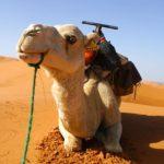 モロッコの奇跡!美しき砂漠の彼方にあるブラックデザートでノマド体験<p>