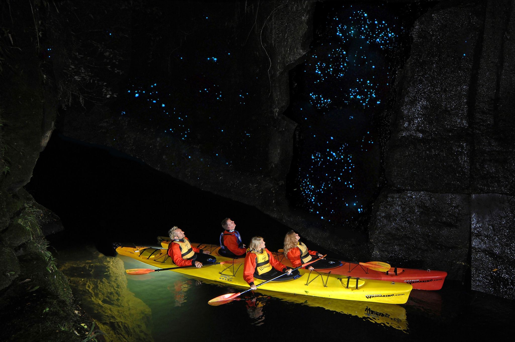 New Zealand Glow worms Caves