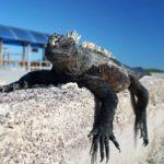 この寝顔に癒されたい!南米ガラパゴスは自力で行けばお得にいけちゃうハートフルアイランド!