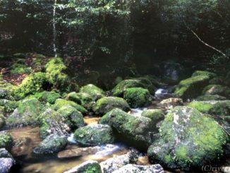 鹿児島県 屋久島 Kagoshima Yakushima