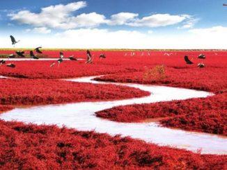 紅海灘風景区 盤錦市 遼寧省