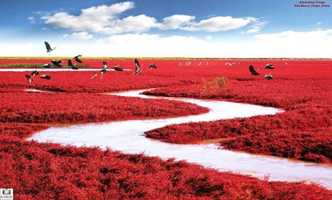 大地が燃える!奇跡のレッドビーチ「紅海灘風景区」中国遼寧省