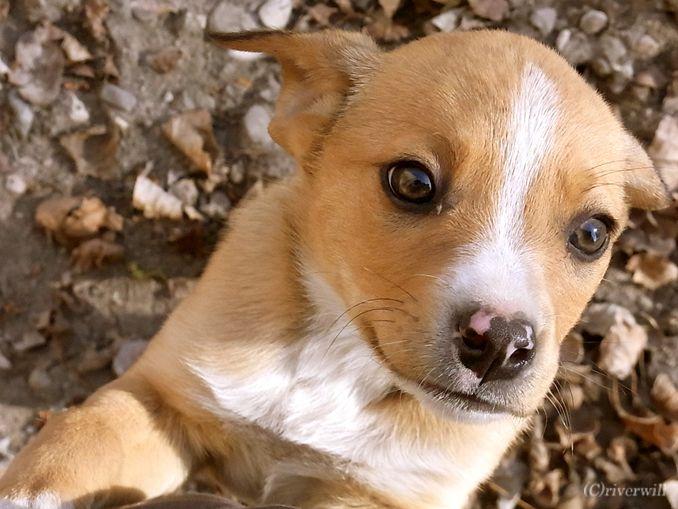 アルゼンチン パピー Argentina Puppy