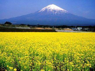 富士山 mount Fuji Yama