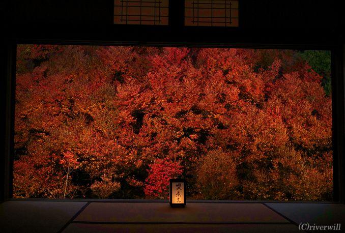 但馬安国寺 ドウダンツツジ 兵庫県 TajimaAnkokuji Hyogo Japanese enkianthus