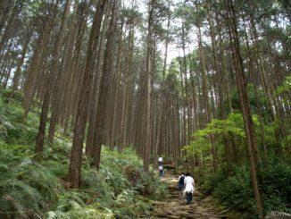 三重県 熊野古道 馬越峠 Kumanokodo Magose Pass