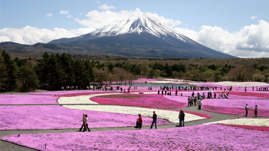 29 富士芝桜まつり(山梨) Japan's 34 most beautiful places
