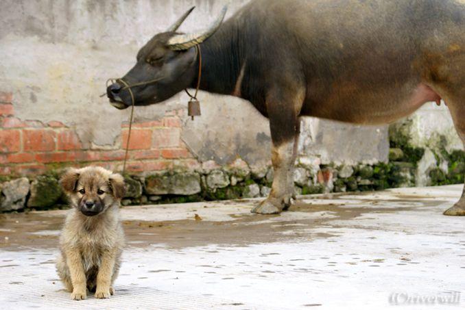中国 雲南省 新街鎮 パピー China Yunnan Puppy