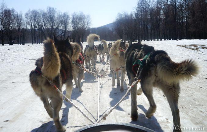 モンゴル テレルジ Mongolia  Terelj