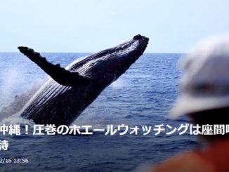 沖縄 座間味 ホエールウォッチング Okinawa Zamami Whale Watching