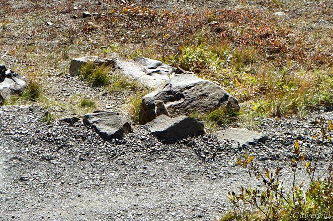 デナリ国立公園 アラスカ Denali Alaska