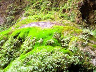 中国 湖南省 張家界 張家界大峡谷 China Hunan Zhangjiajie Valley